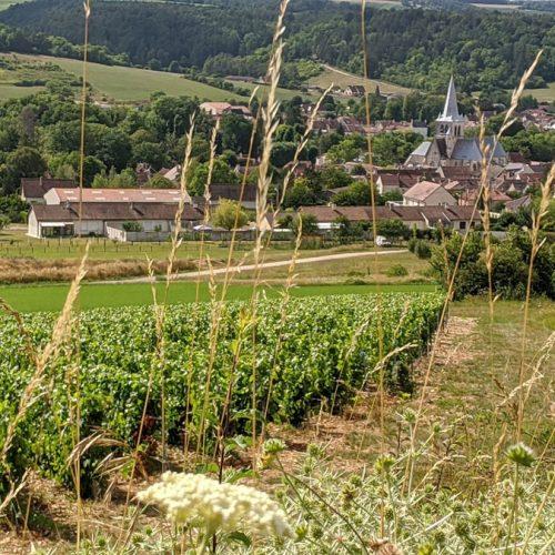 Les-Riceys-vue-village